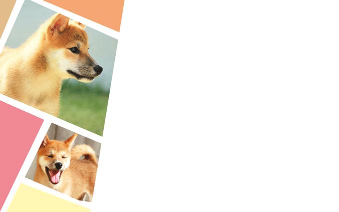 ショップカード(犬)のデザインテンプレート